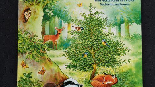 Herbstanfang – Die kleine Buche und ihre Freunde
